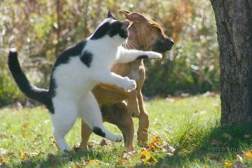 犬,猫,ほっこり,画像,まとめ012