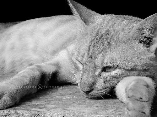 猫,愛らしい,ウインク画像,まとめ014