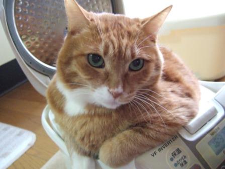 炊飯器,猫,可愛すぎる015