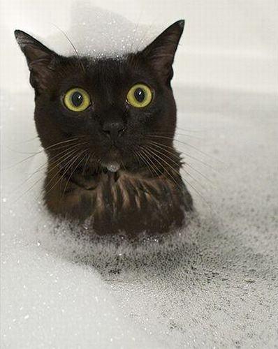 猫,湯船,可愛すぎる,お風呂,画像,まとめ015