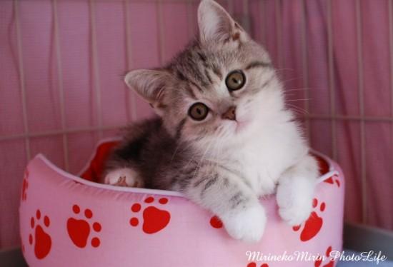 首をかしげている,可愛い,猫.画像,まとめ017