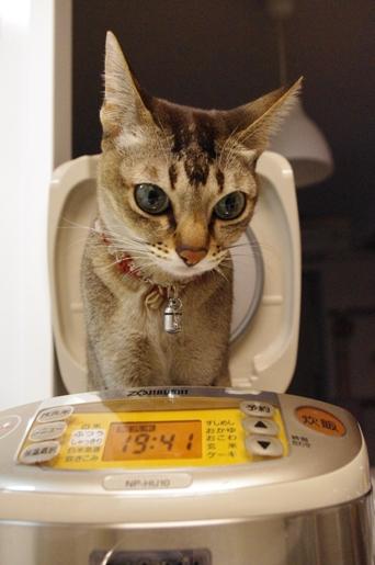 炊飯器,猫,可愛すぎる019