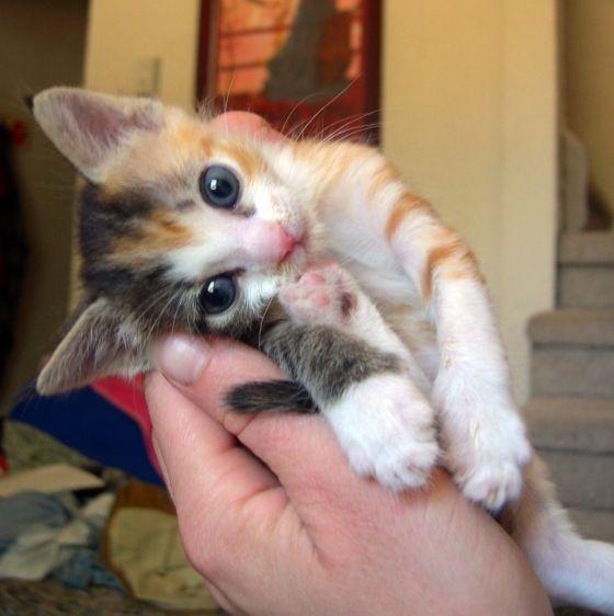 首をかしげている,可愛い,猫.画像,まとめ019