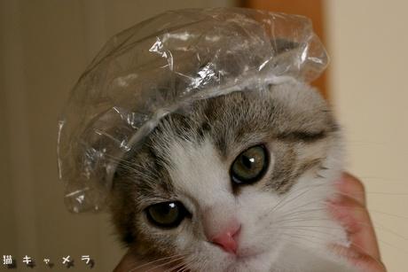 猫,湯船,可愛すぎる,お風呂,画像,まとめ019
