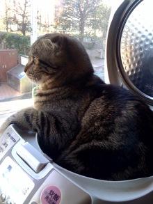 炊飯器,猫,可愛すぎる020