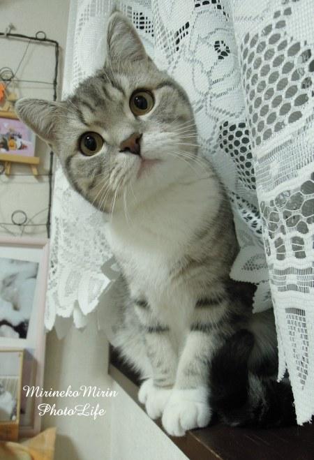 首をかしげている,可愛い,猫.画像,まとめ020