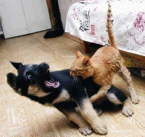 犬,猫,ほっこり,画像,まとめ021