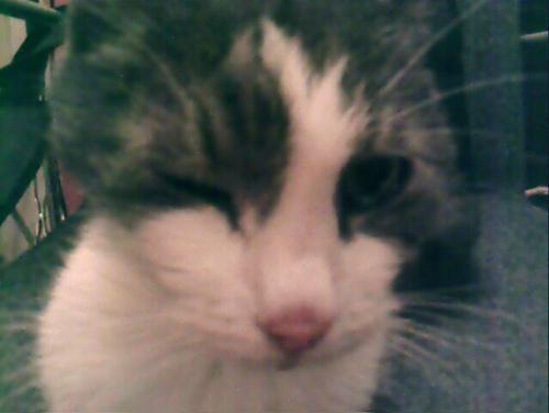 猫,愛らしい,ウインク画像,まとめ022
