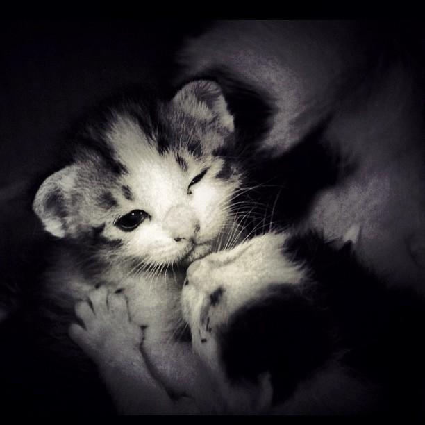 猫,愛らしい,ウインク画像,まとめ024