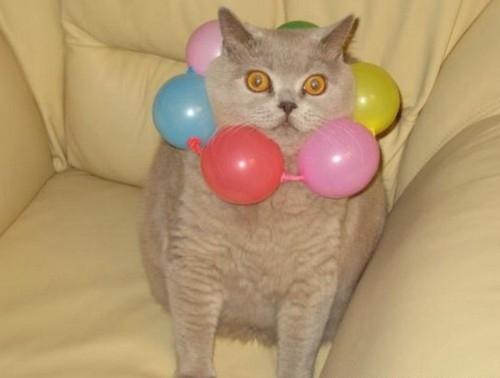 猫,面白,ネタ,画像,まとめ025