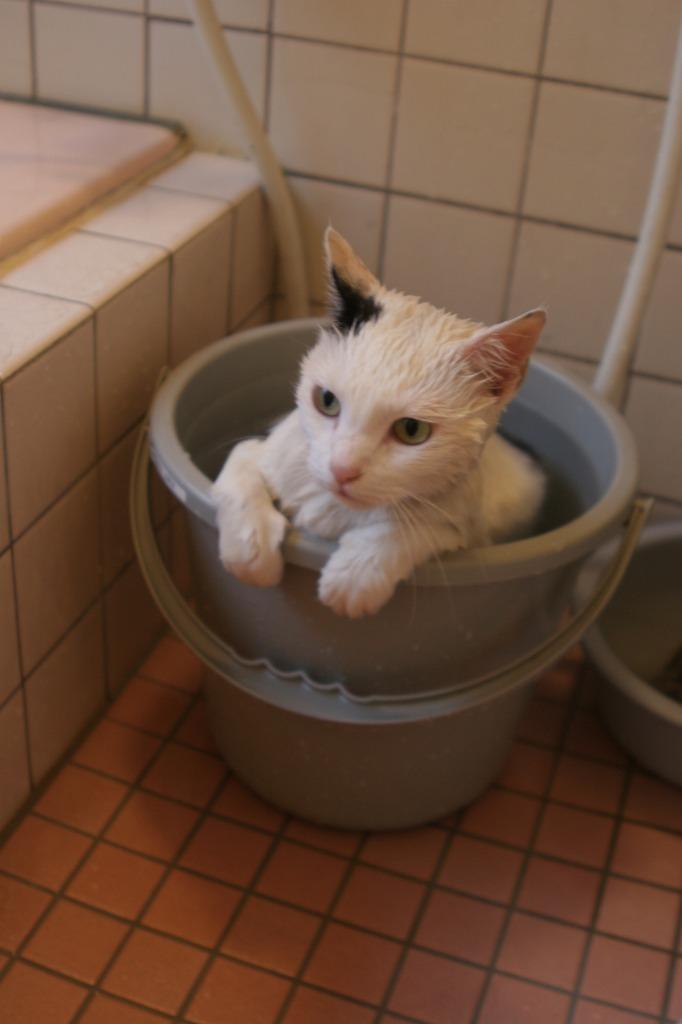 猫,湯船,可愛すぎる,お風呂,画像,まとめ027