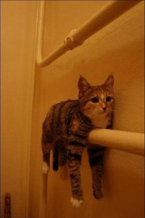 猫,面白,ネタ,画像,まとめ030