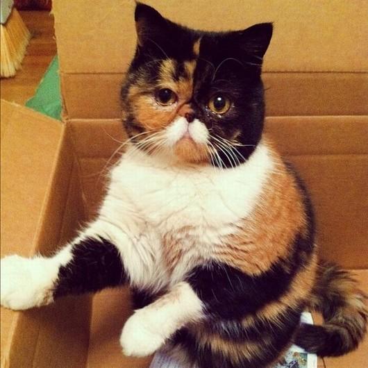 猫,面白,ネタ,画像,まとめ033