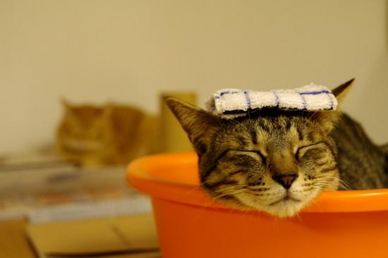 猫,湯船,可愛すぎる,お風呂,画像,まとめ036