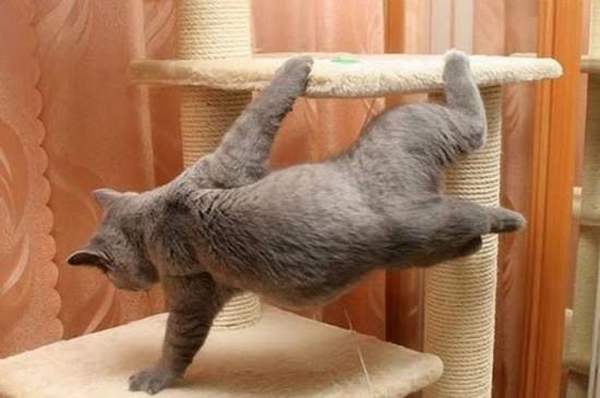 猫,面白,ネタ,画像,まとめ046