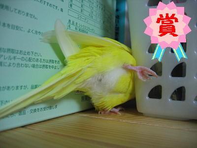 鳥,可愛すぎる,尻,ケツ,画像003