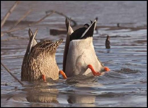 鳥,可愛すぎる,尻,ケツ,画像009