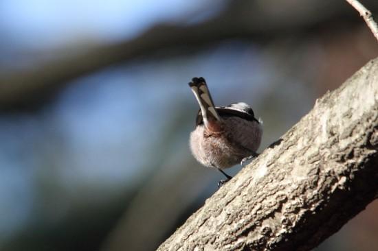 鳥,可愛すぎる,尻,ケツ,画像012