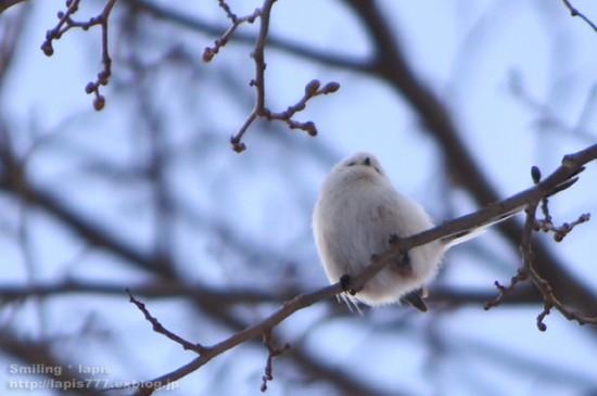 鳥,可愛すぎる,尻,ケツ,画像014