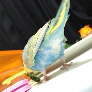 鳥,可愛すぎる,尻,ケツ,画像015