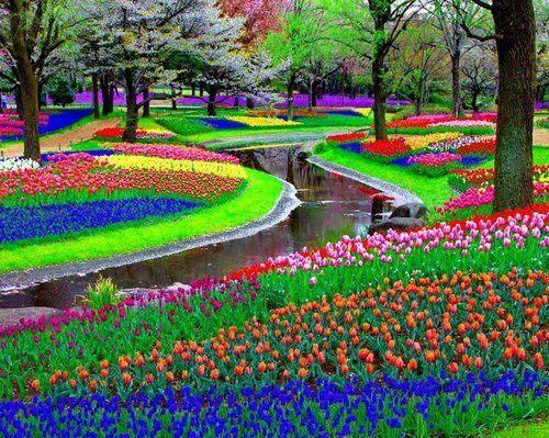 これはすごい,絶景,花畑,画像,まとめ002
