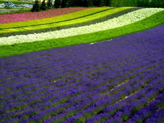 これはすごい,絶景,花畑,画像,まとめ003