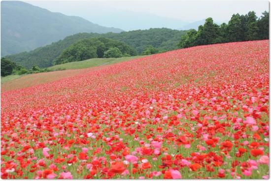 これはすごい,絶景,花畑,画像,まとめ005