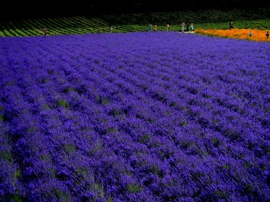 これはすごい,絶景,花畑,画像,まとめ007