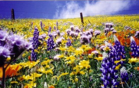 これはすごい,絶景,花畑,画像,まとめ008