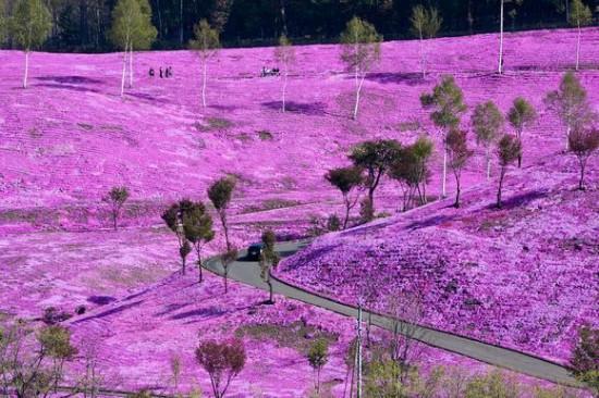 これはすごい,絶景,花畑,画像,まとめ009
