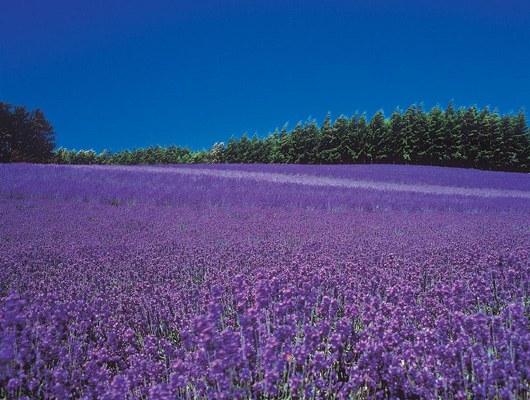 これはすごい,絶景,花畑,画像,まとめ010