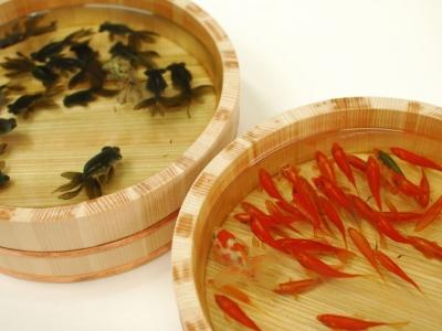 金魚アート,画像,まとめ015