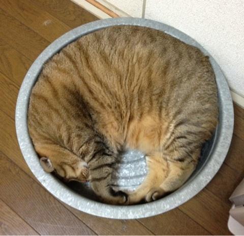 ぽっちゃり,デブ猫,画像,まとめ019