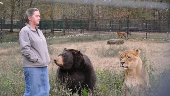 クマ,トラ,ライオン,仲良し,画像,まとめ018