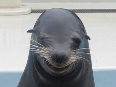 ほっこり,動物,笑顔,画像,まとめ022