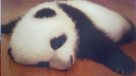癒される,動物,寝顔,画像,まとめ028