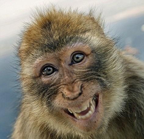 ほっこり,動物,笑顔,画像,まとめ032