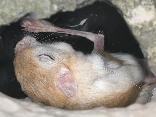 癒される,動物,寝顔,画像,まとめ053