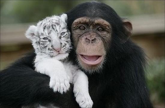 仲のいい,動物,画像,まとめ059