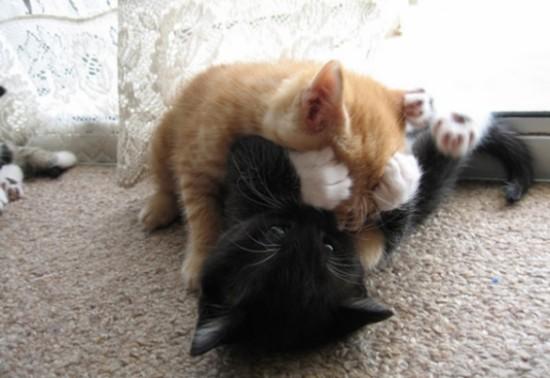 手,目隠し,猫画像,可愛すぎる005