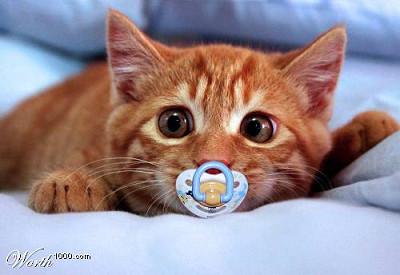 哺乳瓶,ミルク,可愛すぎる,子猫,画像,まとめ006