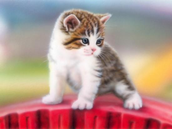 癒し系,子猫,画像,まとめ010