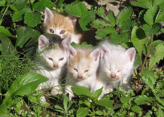 癒し系,子猫,画像,まとめ011