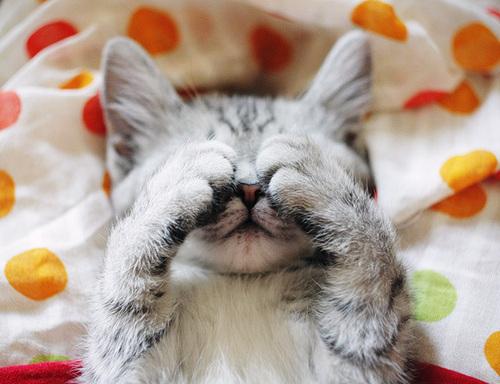 手,目隠し,猫画像,可愛すぎる017