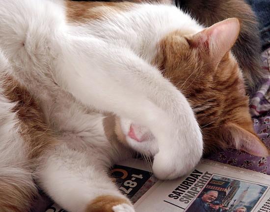 手,目隠し,猫画像,可愛すぎる019
