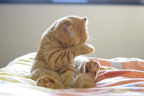 手,目隠し,猫画像,可愛すぎる020