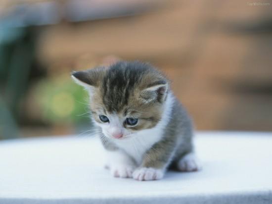 癒し系,子猫,画像,まとめ031