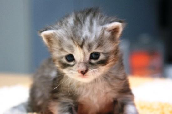 癒し系,子猫,画像,まとめ044