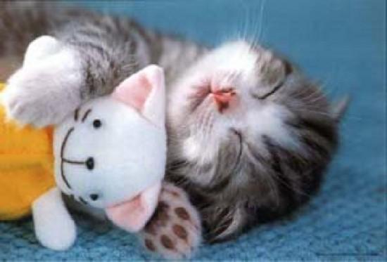 癒し系,子猫,画像,まとめ052