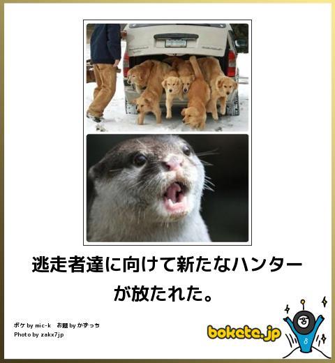 大爆笑,bokete,画像,貼っていく1359